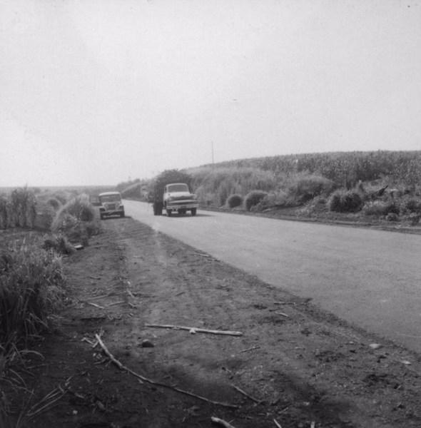 Caminhões carregados de cana : Município de Bandeirantes (PR) - 1960
