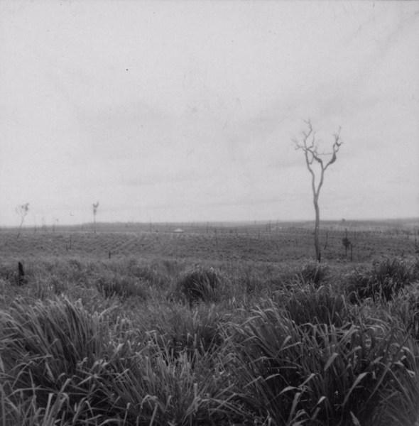Relevo suave próximo a Guaraci (arenito Caiuá) (PR) - 1960