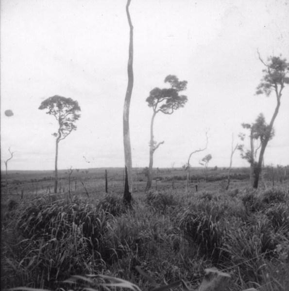 Relevo suave próximo a Guaraci (arenito Caiuá), devastação à 645 ms. (PR) - 1960