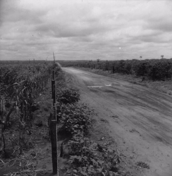 Estrada de Paranavaí para Cianorte : município de Tamboara (PR) - 1960