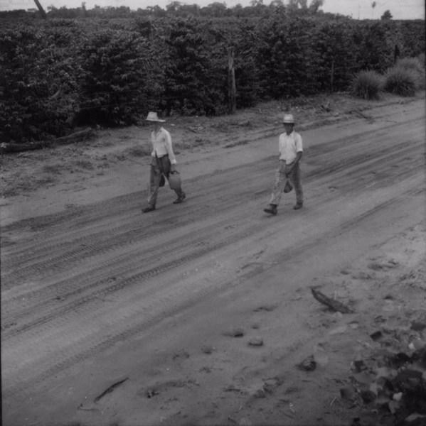 Trabalhadores, na estrada, carregando água : município de Tamboara (PR) - 1960