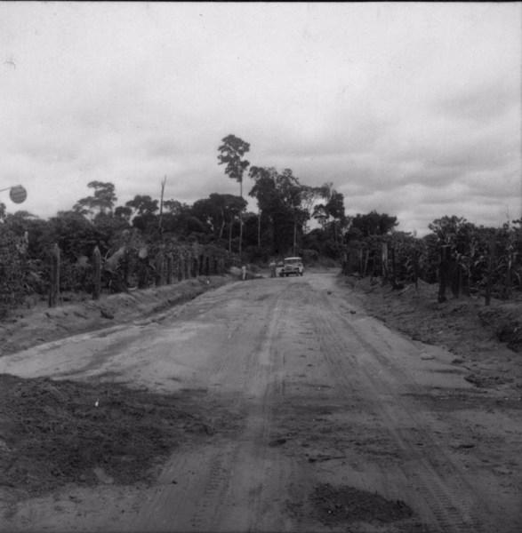 Cafezal e floresta ao fundo : município de Tamboara (PR) - 1960