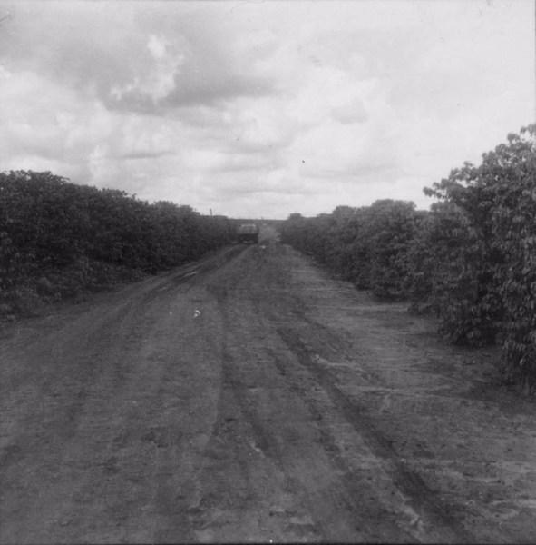 Café tipo Sumatra cultivado em terras mistas : município de São Carlos do Ivaí (PR) - 1960