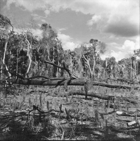 Devastação da mata nas proximidades do rio Ivaí : município de São Carlos do Ivaí (PR) - 1960