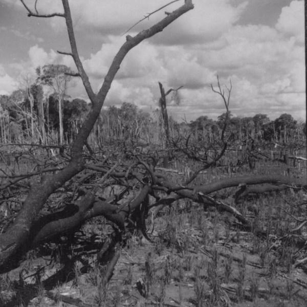 Devastação da mata nas proximidades do rio Ivaí, em São Carlos do Ivaí (PR) - 1960