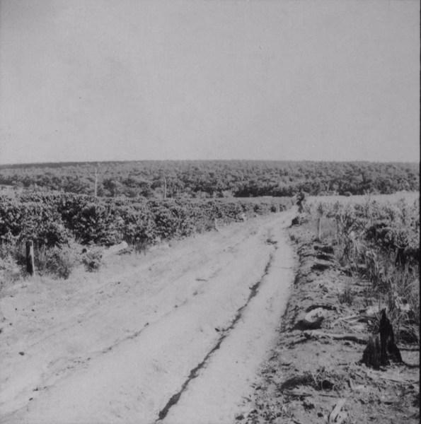 Floresta à margem do rio Ivaí : município de São Carlos do Ivaí (PR) - 1960