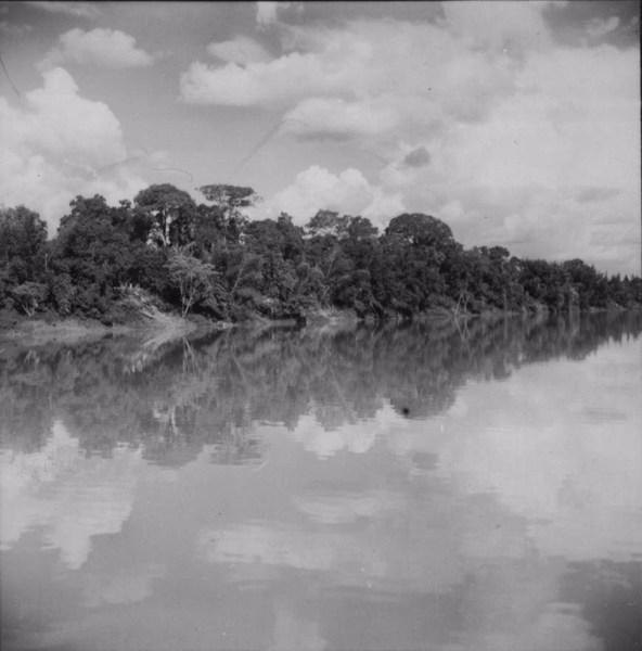 Vegetação à margem do rio Ivaí : município de São Carlos do Ivaí (PR) - 1960