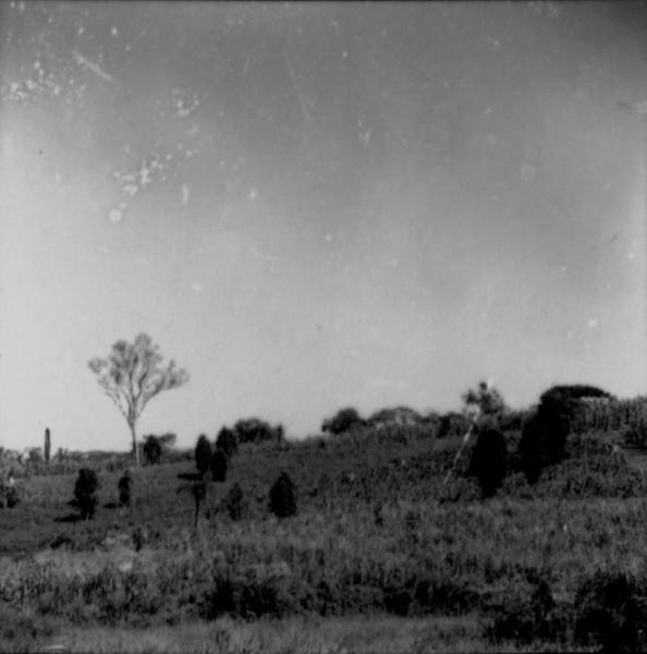 Milho associado ao mate : município de Marmeleiro (PR) - 1966