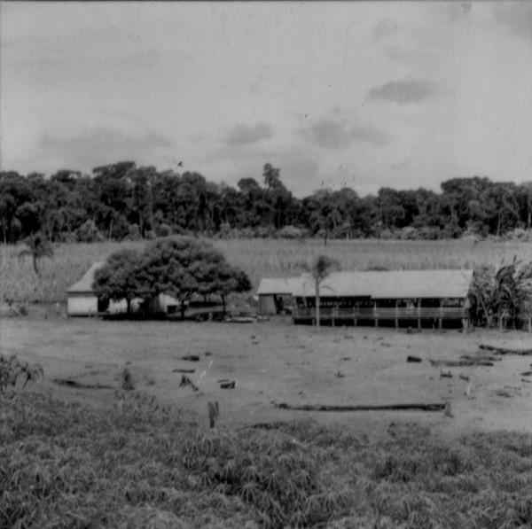 Conjunto, residências com galpão e chiqueiro : Município Marechal Cândido Rondon (PR) - s.d.