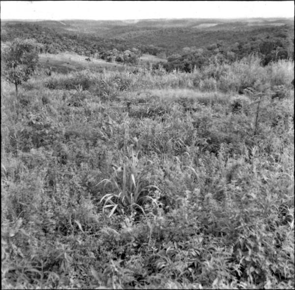Patamares perto de Matelândia 660ms (PR) - 1965