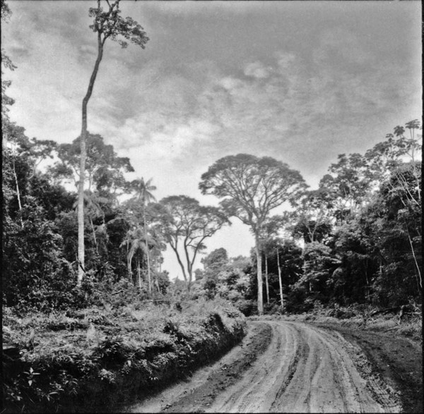 Mata virgem à margem da estrada para Marechal Cândido Rondon (PR) - 1965