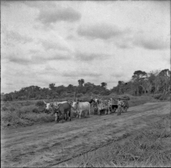 Carro de boi : Município de Iporã (PR) - 1965