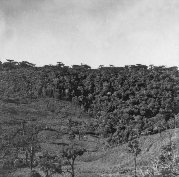 [Aproveitamento de encosta para implantação de lavoura de milho, no município de Marmeleiro (PR)] - 1966