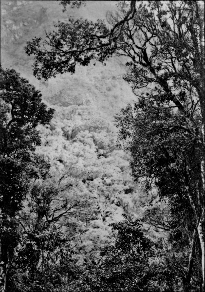 Aspecto da vegetação da Serra de Teresópolis (RJ) - s.d.