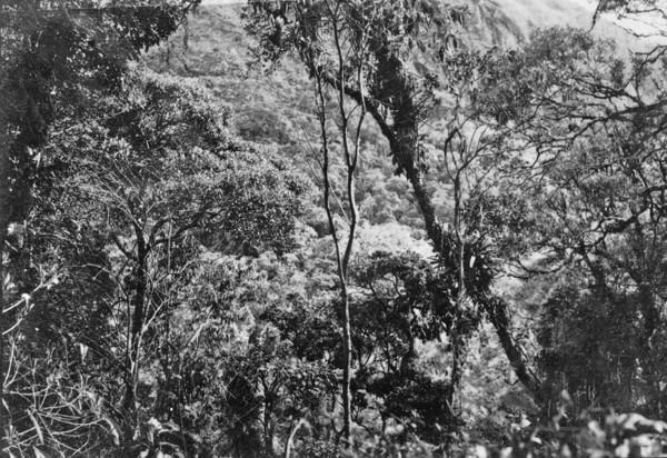 Aspecto da vegetação da Serra de Teresópolis (RJ) - 195_