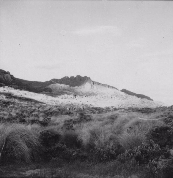 Agulhas Negras : Município de Itatiaia - 195_