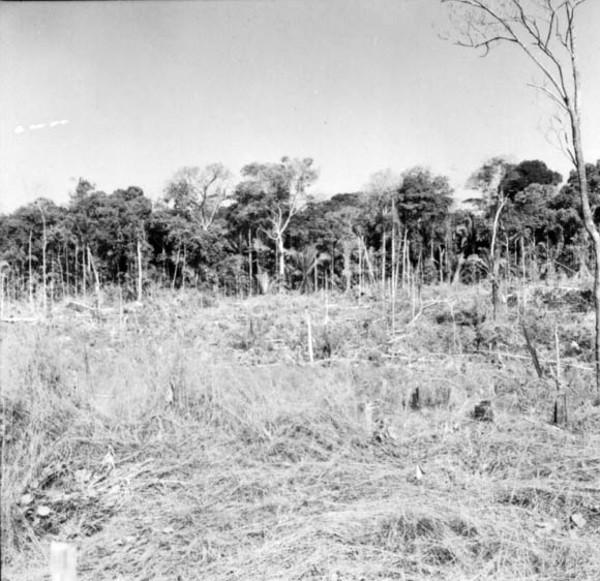 Derrubada à caminho de Boa Vista (RO) - 1968