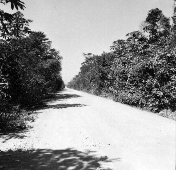 Trecho da BR-364 cortando a mata de terra firme a 8 km ao norte de Ariquemes (RO) - 1968