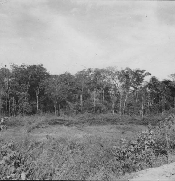 Mata perenifólia no vale do Mucajaí (RR) - 1978