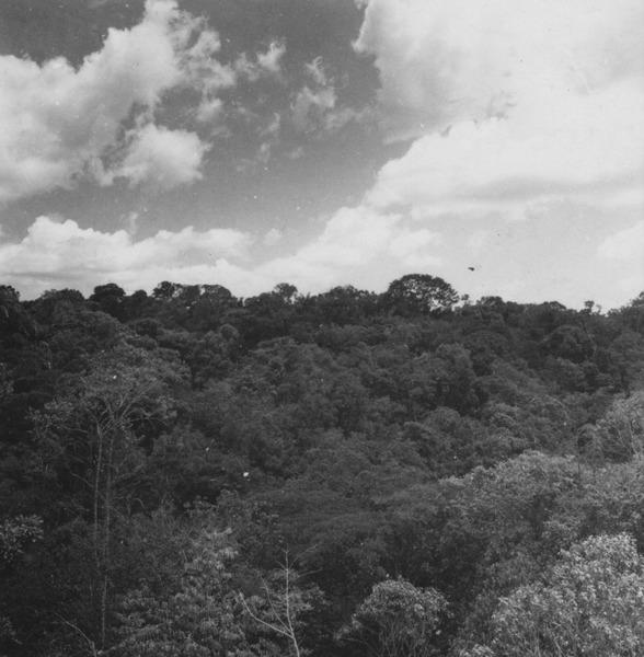 Mata perinofólia na vertente meridional da Serra de Pacaraima (RR) - 1978