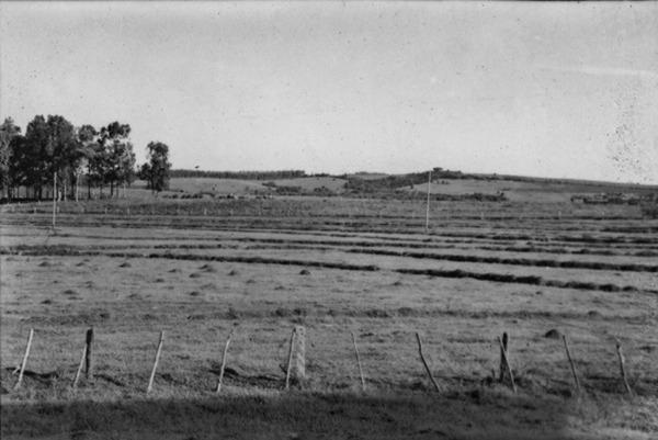 Baixada, antiga arrozal, atualmente campo de pastagem : Município de Cachoeira do Sul - 1954
