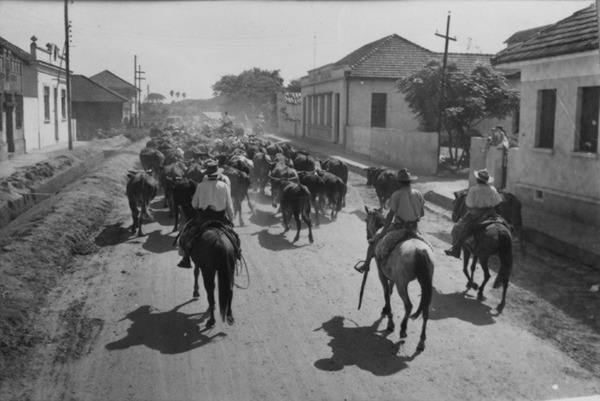 Boiada atravessando São Jerônimo (RS) - 1954