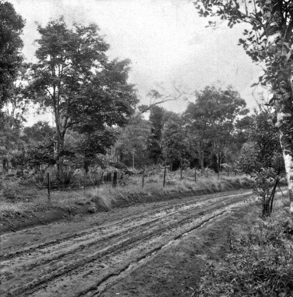 Vegetação perto de Braga : Município de Três Passos (RS) - 1959