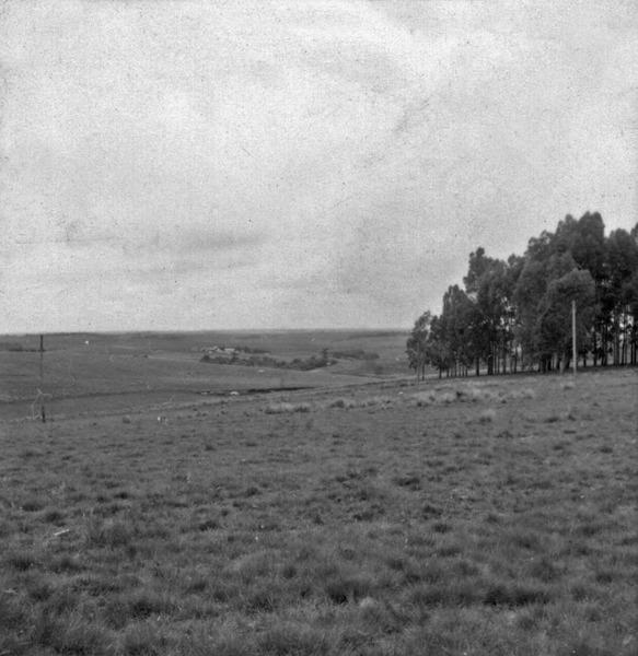 Uma granja (trigo) da família Gerett : Carázinho (RS) - 1959