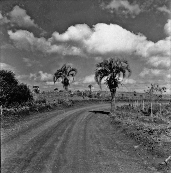 Palmeira Butiá, perto de Ponte Serrada : município de Joaçaba (SC) - 1957