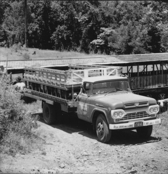 Caminhão transportando porcos para a engorda : município de Concórdia - 1966