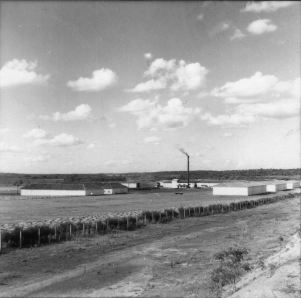 [Plantação de linho no município de Itaiópolis (SC)] - 1965