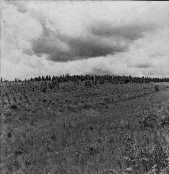 Derrubada [desmatamento] (SC) - 1965