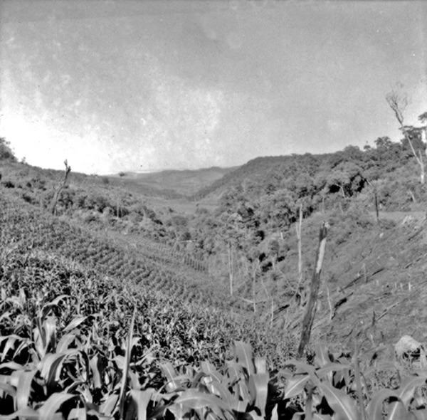 Vista de um vale perto do Rio Uruguai no município de Campo Erê (SC) - 1965
