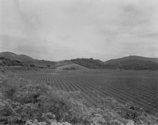 Terreno preparado para o plantio do milho entre São José e Rio Fortuna (SC) - 1953