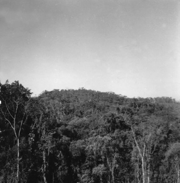 Mata na estrada BR-101, no município de Joinville (SC) - 1972