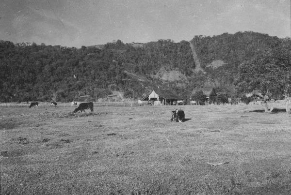 Casa do pequeno agricultor, perto de Blumenau (SC) - 1955