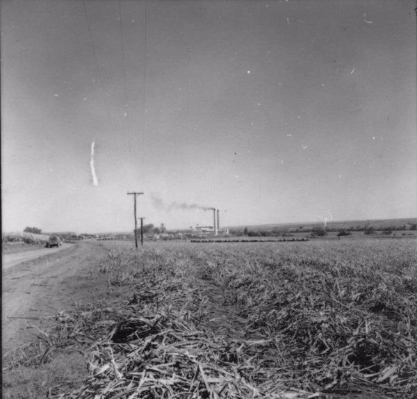 Usina Junqueira : Município de Igarapava (SP) - 1957