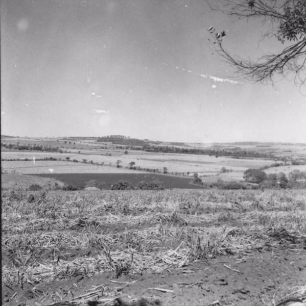 Cana : Município de Igarapava (SP) - 1957