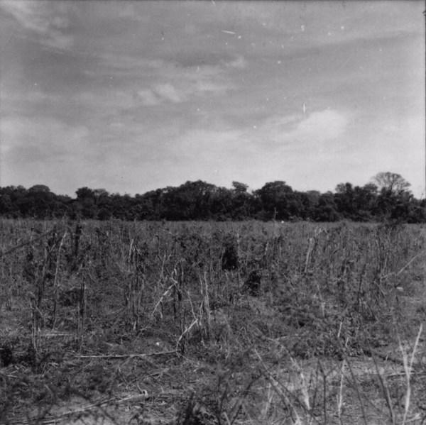 Mata do Espigão, perto de Monte Aprazível (SP) - 1957