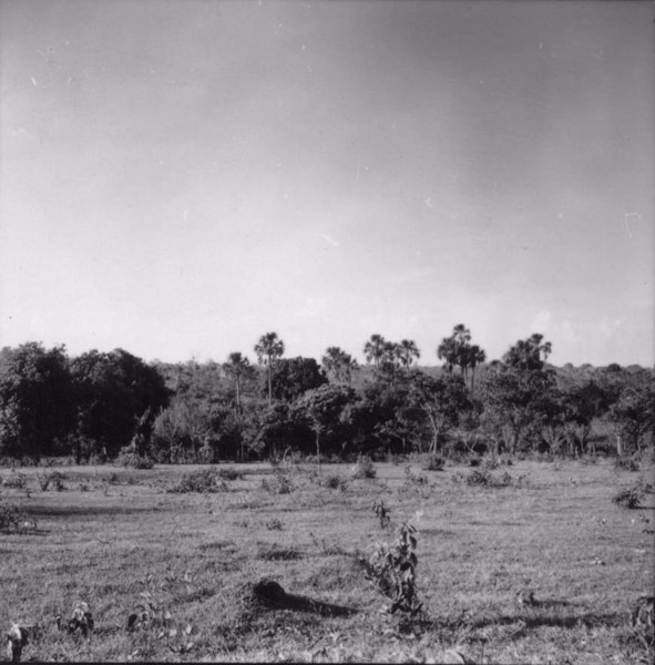 Buritizal, perto da vila de Buritizal (SP) - 1957