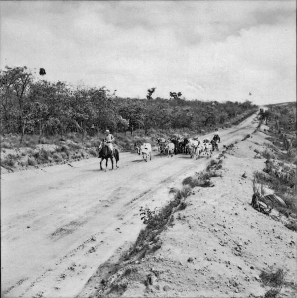 Boiada e recria no município de Piraju (SP) - 1957
