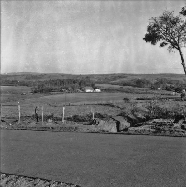 Gado leiteiro em Capivari (SP) - 1957