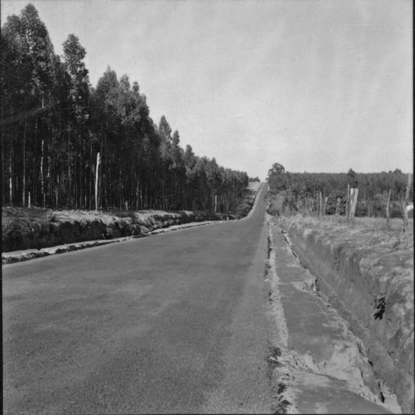 Reflorestamento com eucaliptos entre Monte-Mor e Campinas (SP) - 1957