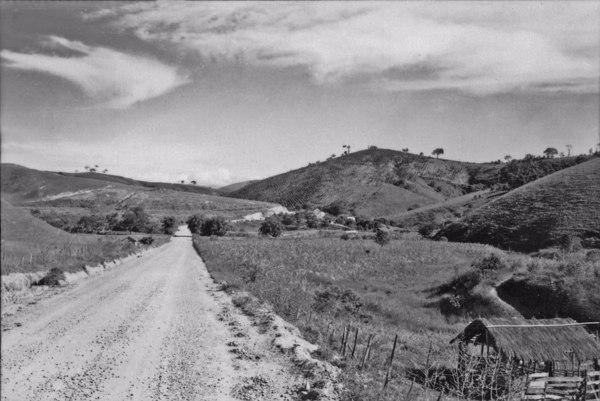 Município de Silveiras, resto de um cafezal, em desaparecimento, vendo-se uma pantação de cana (SP) - 1958