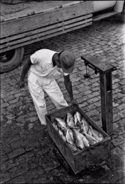 Porto de São Sebastião : o produto da pescaria é colocado em caminhões que os transporta para São Paulo (SP) - 1958