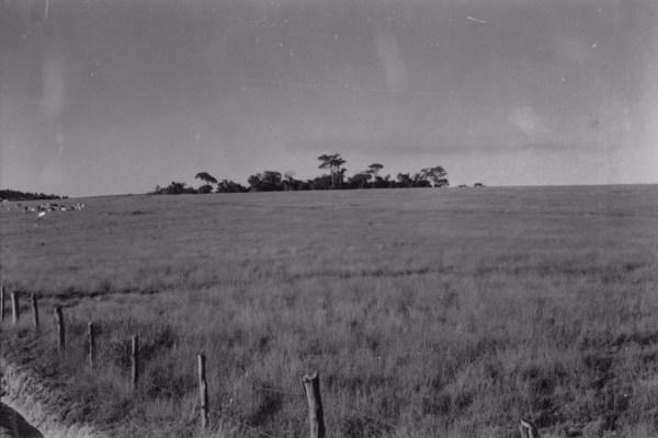 Município de Porto Feliz : fazenda da Matriz, 625m (SP) - 1958