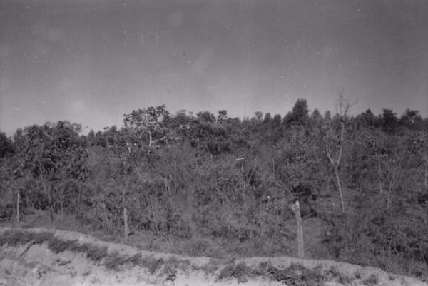Município de Tatuí : vegetação do cerrado na estrada para Itapetininga (SP) - 1958
