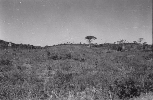 Município de Registro : terras planas e pequenas colinas, 140 a 150 m aproximadamente (SP) - 1958