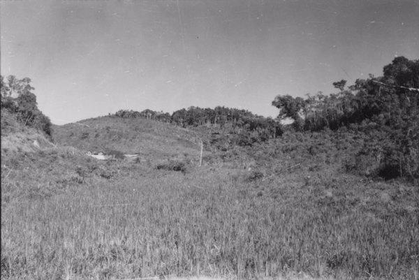 Município de Registro : ao norte de Sete Barras, a topografia é ondulada : os topos na cota dos 100m e o planos 80m (SP) - 1958