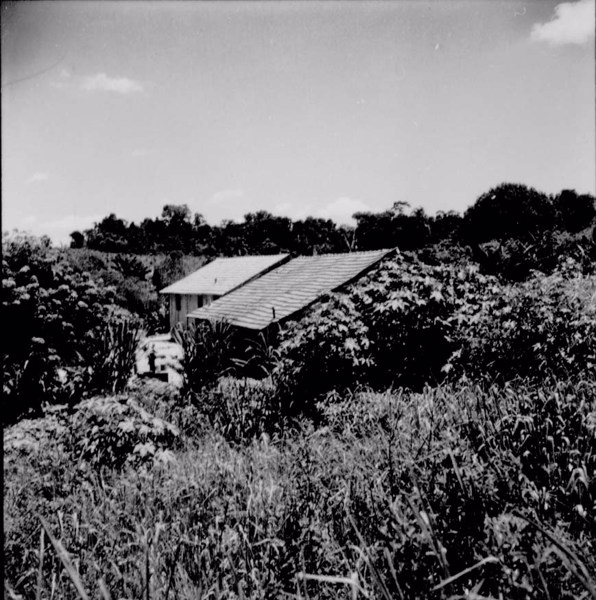 Casa de colono, de madeira, coberta de telha (duas águas) ao fundo cafezais velhos de 30 anos : Município de Vera Cruz (SP) - 1960